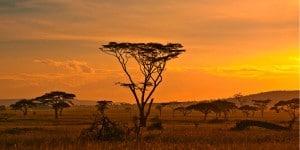 réserve du parc national Kruger